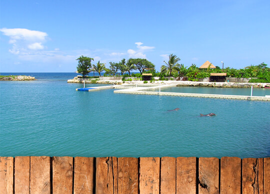 Dolphin Cove Montego Bay Negril