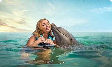 Dolphin Cove Jamaica
