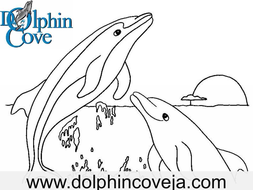 Uncategorized Pictures Of Dolphins To Colour In dolphin cove jamaica fun pages to colour sharks and killer whales are natural predators of dolphins