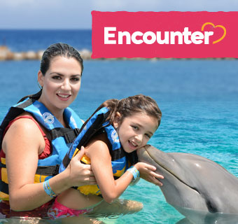 Dolphin Cove: the number one excursion, attraction in Jamaica