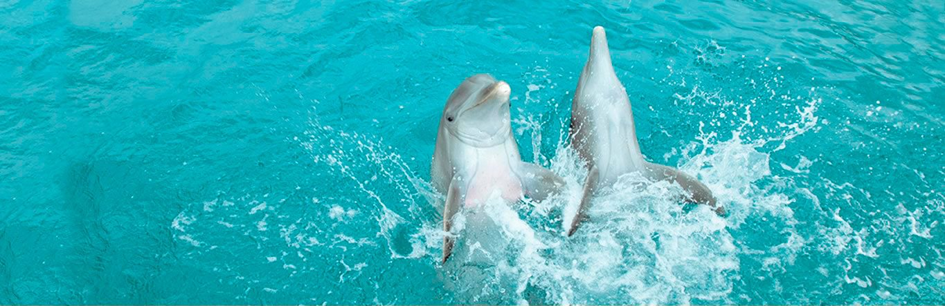 Dolphin Discovery Moon Palace Jamaica